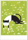 Prueba negra y blanca del gato en hierba Imagen de archivo libre de regalías
