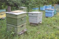 Pruebas de la abeja con la miel en un colmenar Imagen de archivo libre de regalías