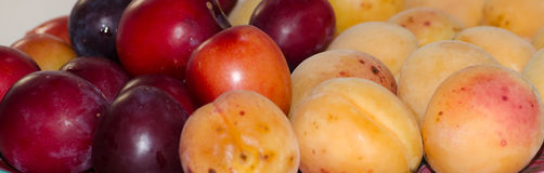Prugna albicocca del primo piano della frutta fotografia stock