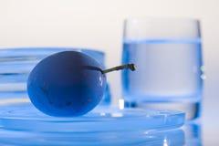 Prugna blu Fotografia Stock