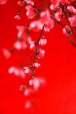 Prugna cinese Fotografie Stock