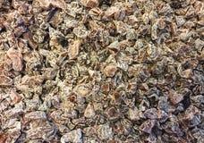 Prugna cinese secca, albicocche secche Immagini Stock