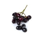 Prugna di Jambolan o prugna di Java con il gambo su bianco Fotografia Stock