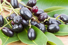 Prugna di Jambolan o syzygium cumini della prugna di Java '(l) Skeels ' fotografia stock libera da diritti