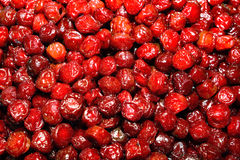Prugna dolce asciutta rossa Immagini Stock