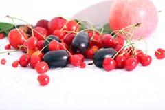 Prugna e mirtillo rosso neri di Java fotografia stock