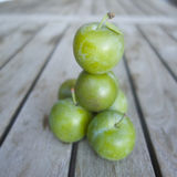 Prugne fresche di verde Immagine Stock Libera da Diritti