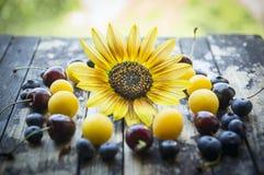 Prugne fresche, more, ciliegia, mirtilli, albicocche su una tavola con il girasole e sfondo naturale fotografia stock libera da diritti