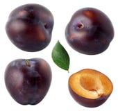 Prugne isolate Raccolta frutti blu del taglio e di interi della prugna isolata su fondo bianco, con il percorso di ritaglio Fotografia Stock