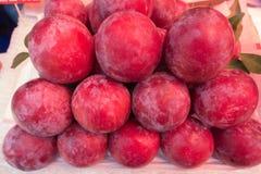 Prugne rosse mature fresche Fotografia Stock