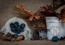 Prugne succose mature su un fondo rustico dell'annata di autunno fotografia stock libera da diritti