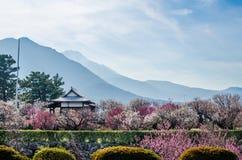Pruimbloesems rond Shimabara-kasteel in de lente Royalty-vrije Stock Fotografie