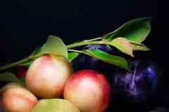 Pruimen en nectarines op de donkere achtergrond Royalty-vrije Stock Foto's