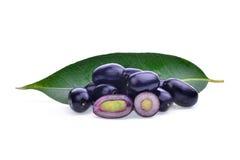 Prune de Jambolan ou prune de Java d'isolement sur le blanc Image libre de droits