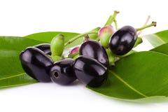 Prune de Jambolan ou prune de Java sur le fond blanc Photos stock
