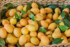 Prune de Mariam, prune de jardin Photos stock