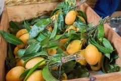 Prune de Mariam, prune de jardin Photo libre de droits