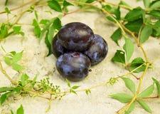 Prune fraîche avec des feuilles de raisin photographie stock libre de droits