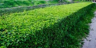 Prune garden Stock Images