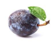 Prune mûre avec la feuille images stock