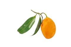 Prune mariale douce sur le fond blanc Photo stock