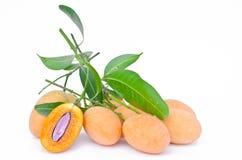 Prune mariale jaune douce, mangue de prune Image libre de droits