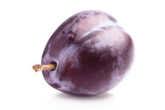 Prune or plum Stock Photography