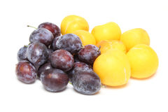 Prune and plum in a white background Stock Images