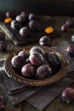 Prune Plums púrpura madura orgánica Imágenes de archivo libres de regalías
