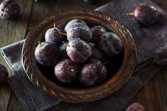 Prune Plums pourpre mûre organique Images stock
