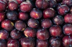 Prune rouge Photos stock