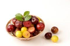 Prune rouge de Golfe, prune d'or de Golfe et prune de rubis de Golfe Image libre de droits
