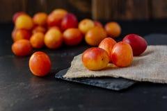 Prune sauvage ou cerise-prune fraîche et mûre sur la surface noire Images libres de droits