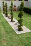 Pruned conifer shrubs Stock Photo