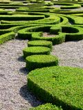 Pruned Hedges. Forming an elaborate pattern in a park Royalty Free Stock Photo