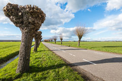 Pruned and not pruned willows along  a country road Royalty Free Stock Image
