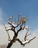 Pruned tree Stock Image