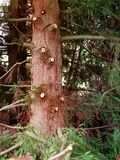 Pruned tree Stock Photo