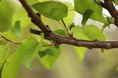 Pruned tree branch. With green leaves. Close-up, shallow DOF Stock Photo