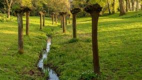 Pruned trees next to a stream, Gladbeck, Germany. Pruned trees next to a stream in the park at the Wasserschloss Wittringen, Gladbeck, North Rhine-Westphalia Royalty Free Stock Image