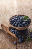 Prunelliers dans la cuvette images stock