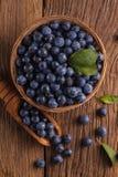 Prunelliers dans la cuvette photographie stock libre de droits