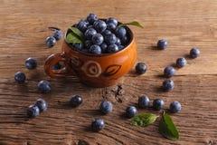 Prunelliers dans la cuvette image stock