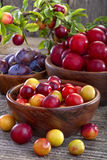 Prunelliers et prunes Image libre de droits
