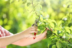 Pruner in the garden royalty free stock images