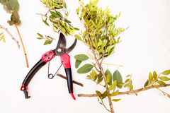 Pruner isolated on a white background. garden tools. Royalty Free Stock Images