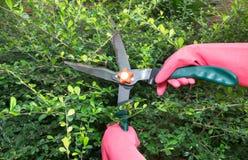 Pruner taglia le piante Immagini Stock Libere da Diritti