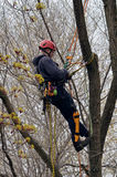 Pruner on a tree Royalty Free Stock Photos