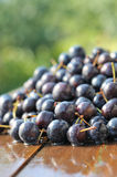 Prunes Stock Images