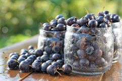 Free Prunes Royalty Free Stock Photography - 20969747